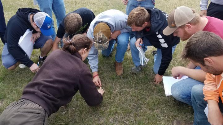 Students identifying plants